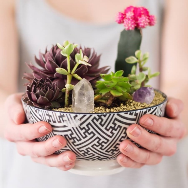 Magical Terrarium ideas to install in Your Home0321
