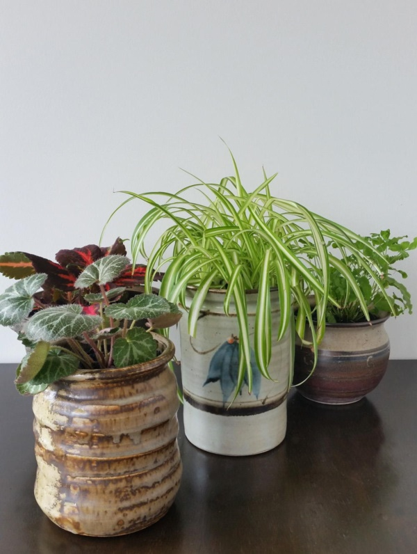Magical Terrarium ideas to install in Your Home0331