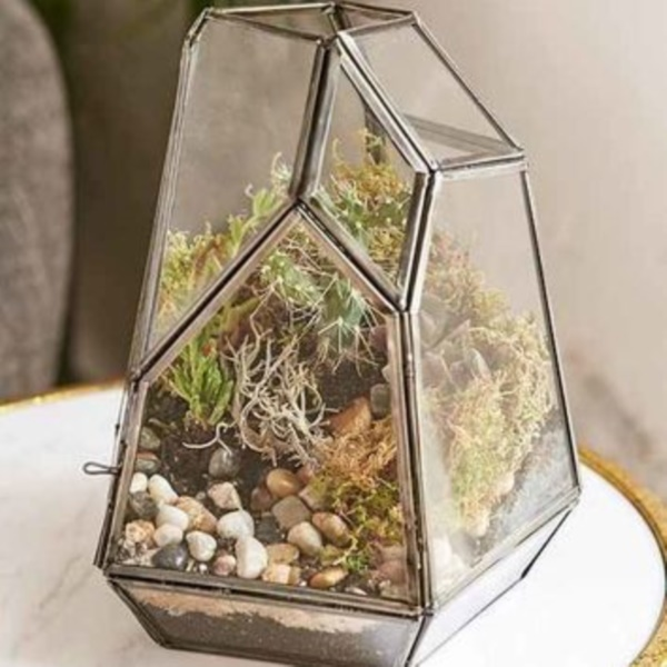 Magical Terrarium ideas to install in Your Home0341