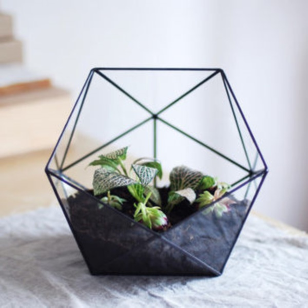 Magical Terrarium ideas to install in Your Home0351