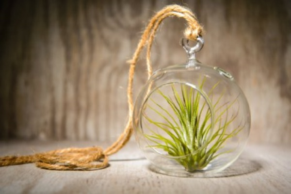 Magical Terrarium ideas to install in Your Home0371