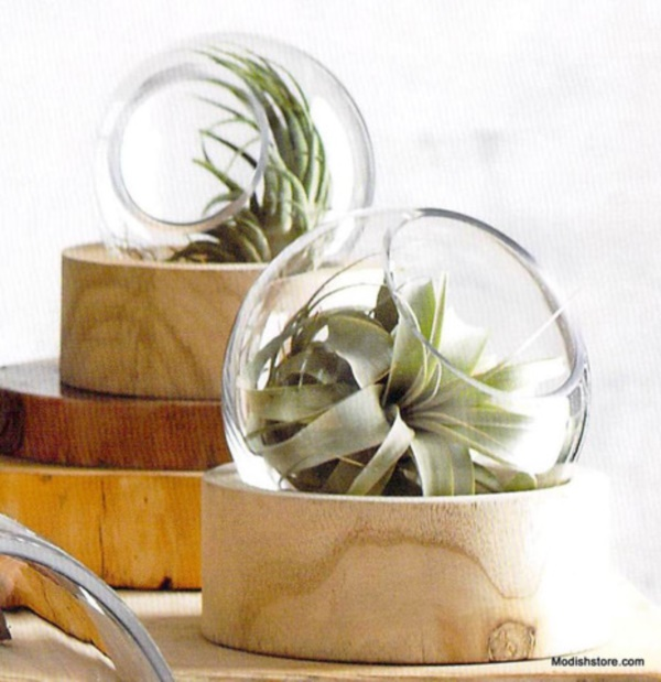 Magical Terrarium ideas to install in Your Home0381
