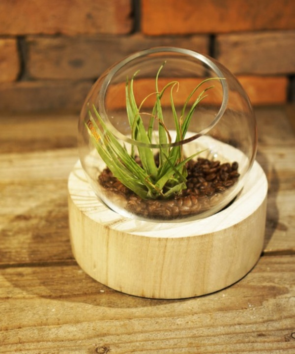 Magical Terrarium ideas to install in Your Home0391