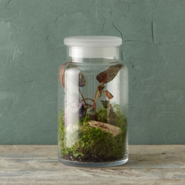 Magical Terrarium ideas to install in Your Home0411