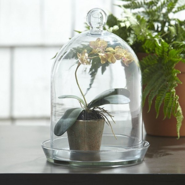 Magical Terrarium ideas to install in Your Home0421