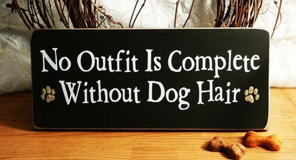 Funny Pet signs to Honor Your Four Legs Buddy - (10)