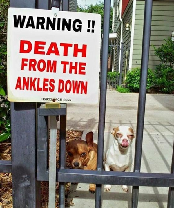 Funny Pet signs to Honor Your Four Legs Buddy - (13)