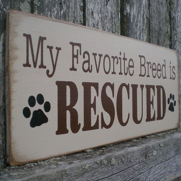 Funny Pet signs to Honor Your Four Legs Buddy - (16)