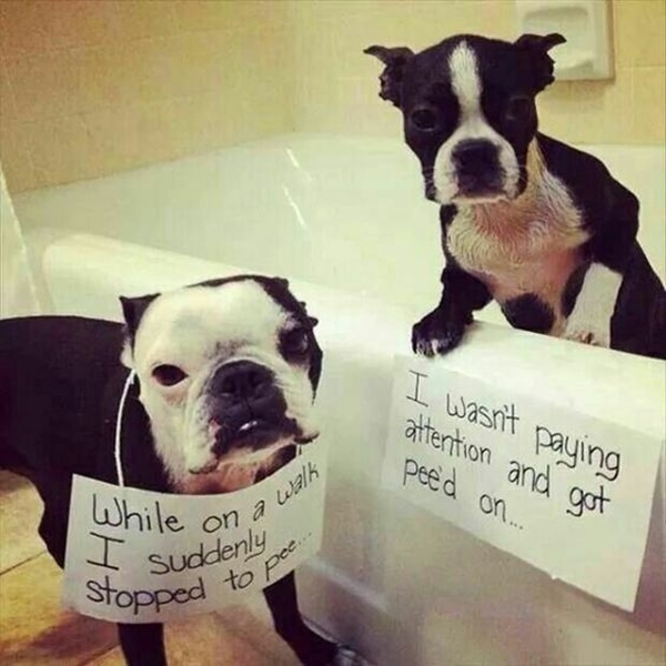 Funny Pet signs to Honor Your Four Legs Buddy - (22)