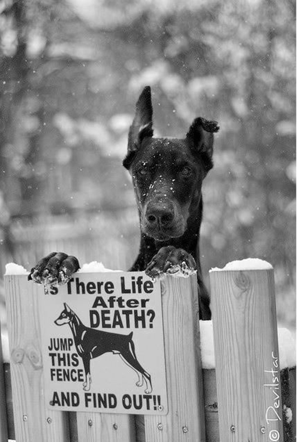 Funny Pet signs to Honor Your Four Legs Buddy - (3)