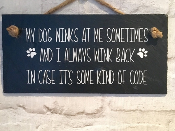 Funny Pet signs to Honor Your Four Legs Buddy - (37)