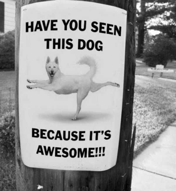 Funny Pet signs to Honor Your Four Legs Buddy - (38)