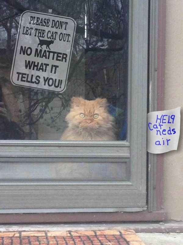 Funny Pet signs to Honor Your Four Legs Buddy - (4)