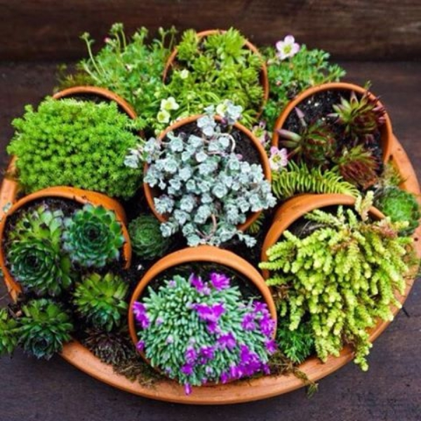 Innovative-Plant-Pots-ideas-12