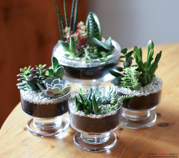 Innovative-Plant-Pots-ideas-24