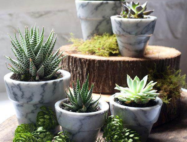 Innovative-Plant-Pots-ideas-33