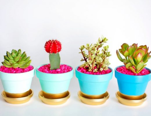 Innovative-Plant-Pots-ideas-feature