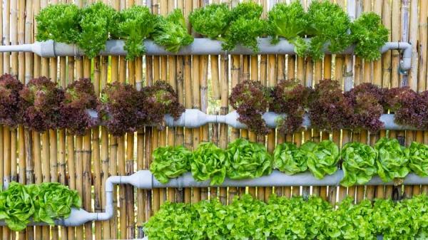 Super-Creative-Vertical-Garden-Ideas-33