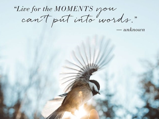 living-moment-quotes-photography-ideas