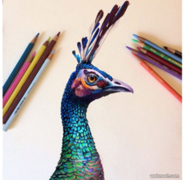 realistic-colour-pencil-drawings