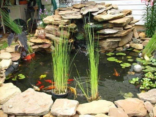 brilliant-indoor-water-garden-ideas