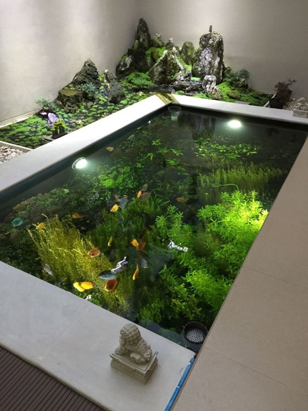 brilliant-indoor-water-garden-ideas